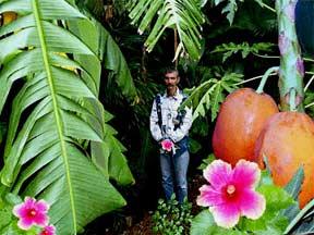 garden1998