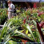 Collection of Bromeliads