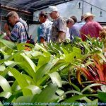Group viewing Bromeliads